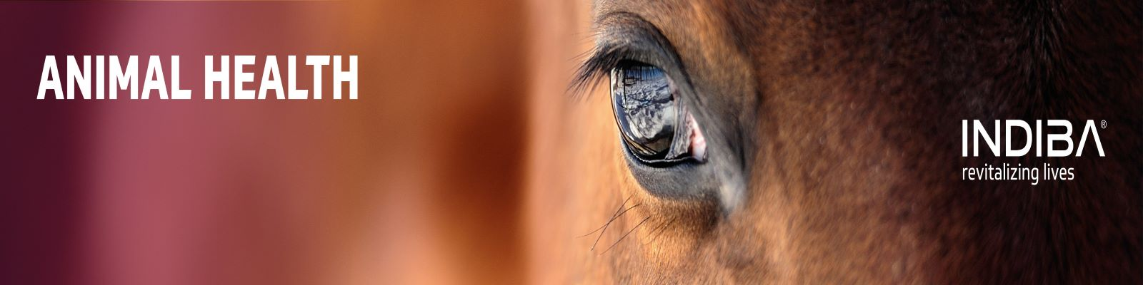 lečenje životinja Indiba terapijom